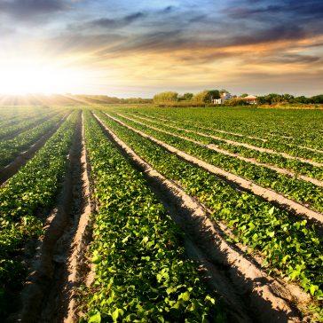 Instituto de Engenharia faz manifesto em apoio à ministra Teresa Cristina, da Agricultura, com adesão de 20 associações