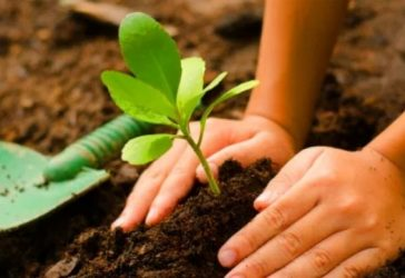Co-Branding do Bem: união de marcas para aumentar impacto positivo de projetos sociais